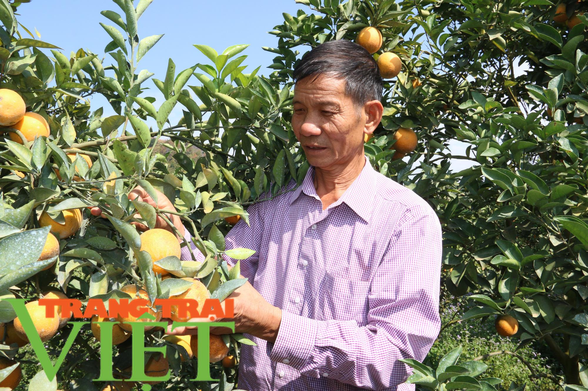 Hội Nông dân Sơn La giúp hội viên làm kinh tế - Ảnh 4.