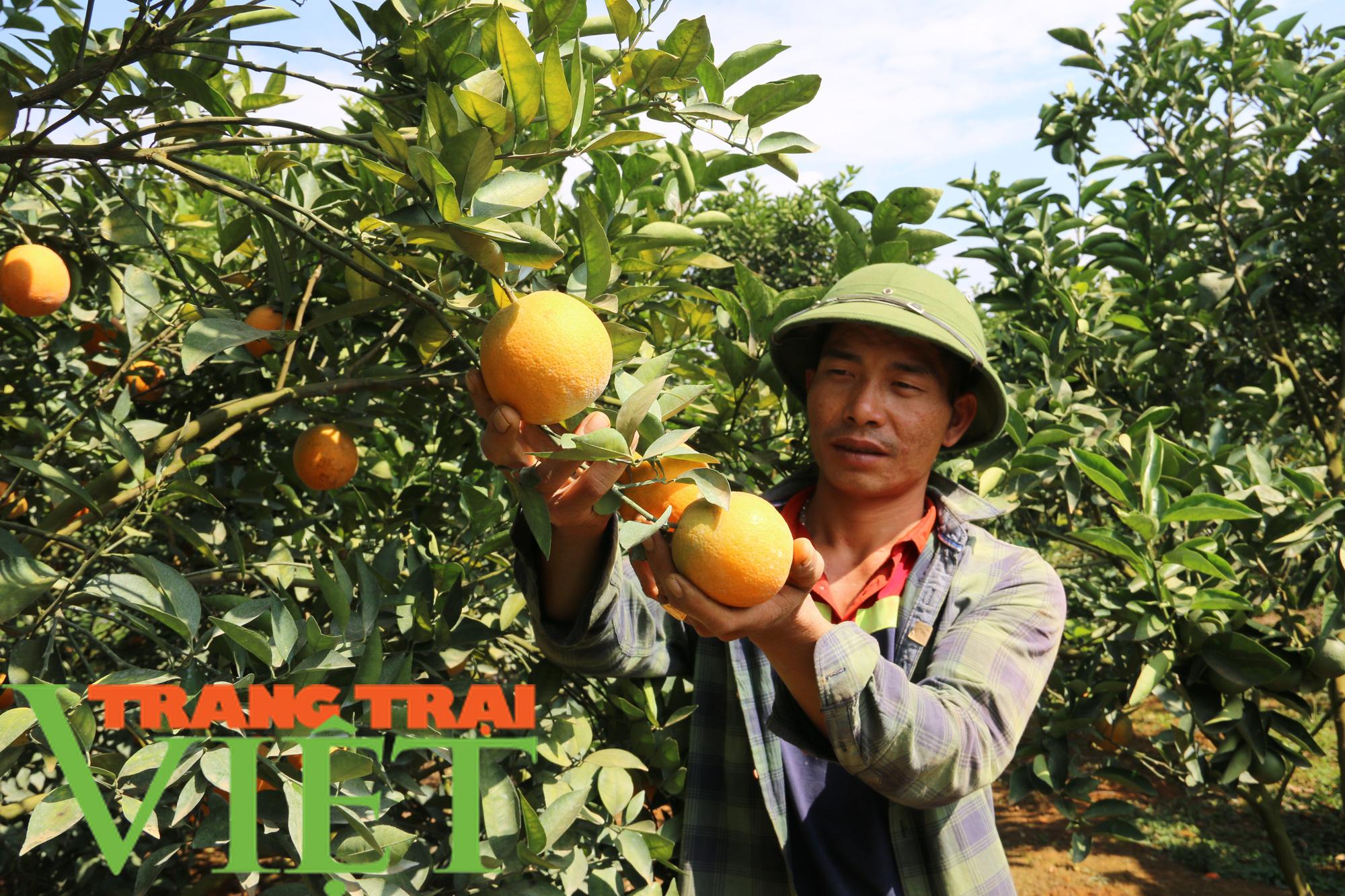 Hội Nông dân Sơn La giúp hội viên làm kinh tế - Ảnh 2.
