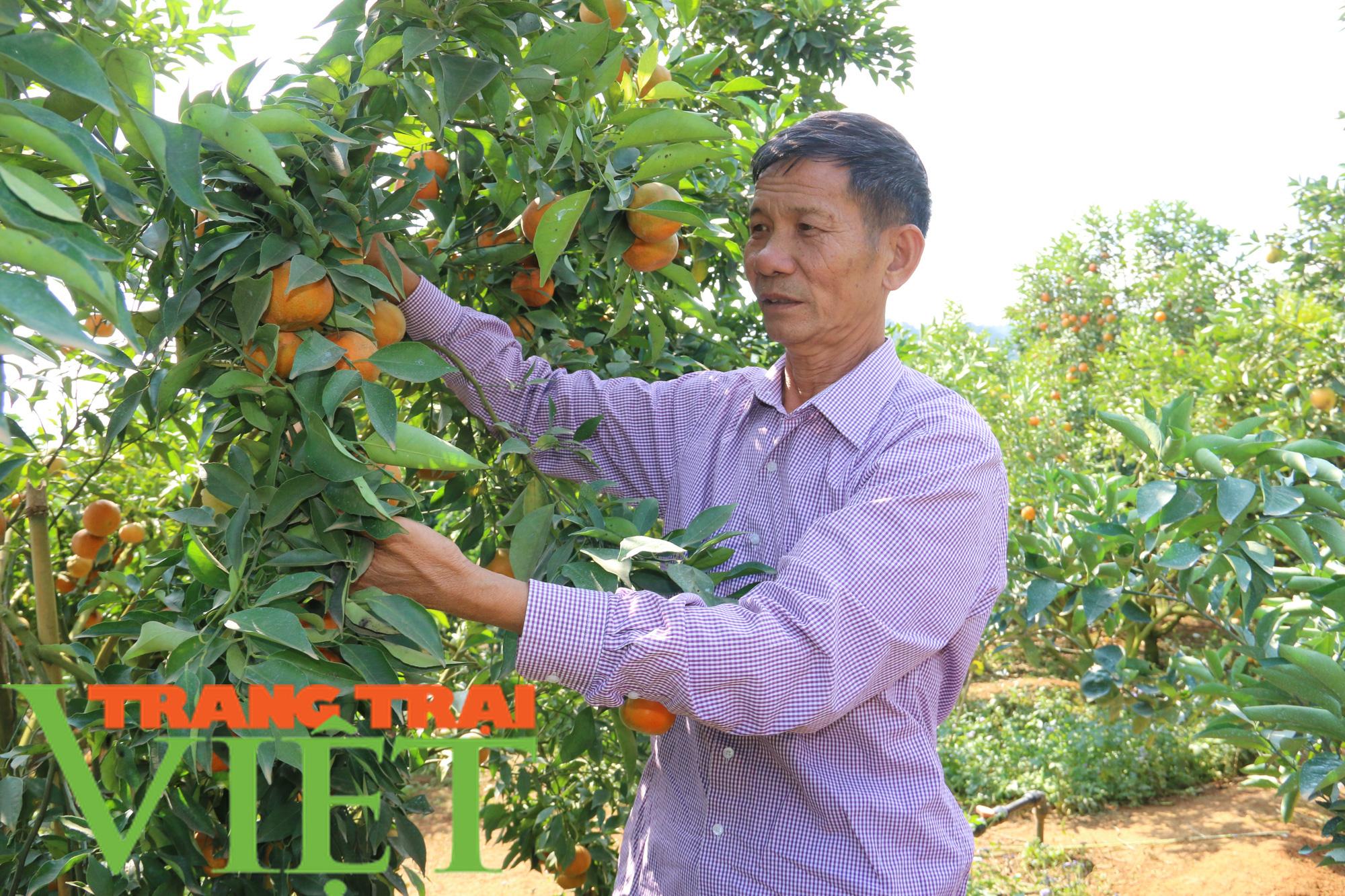 Hội Nông dân tỉnh Sơn La thi đua sản xuất kinh doanh giỏi - Ảnh 2.