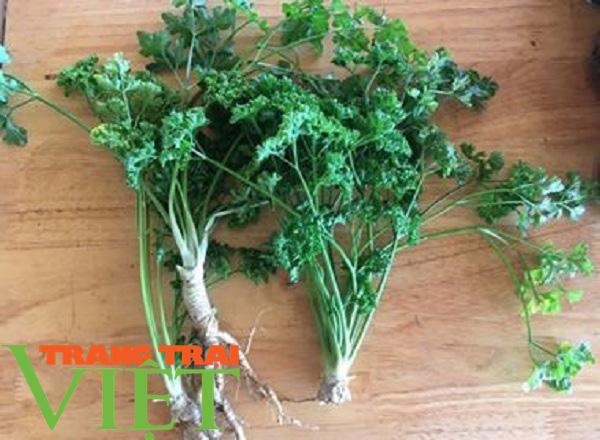 Mận sấy dẻo thảo dược, món quà vùng thảo nguyên xanh - Ảnh 2.