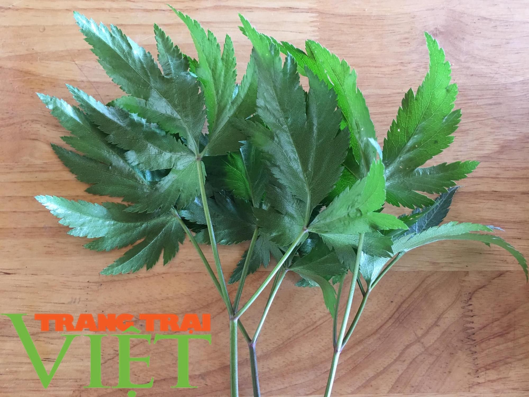 Mận sấy dẻo thảo dược, món quà vùng thảo nguyên xanh - Ảnh 6.