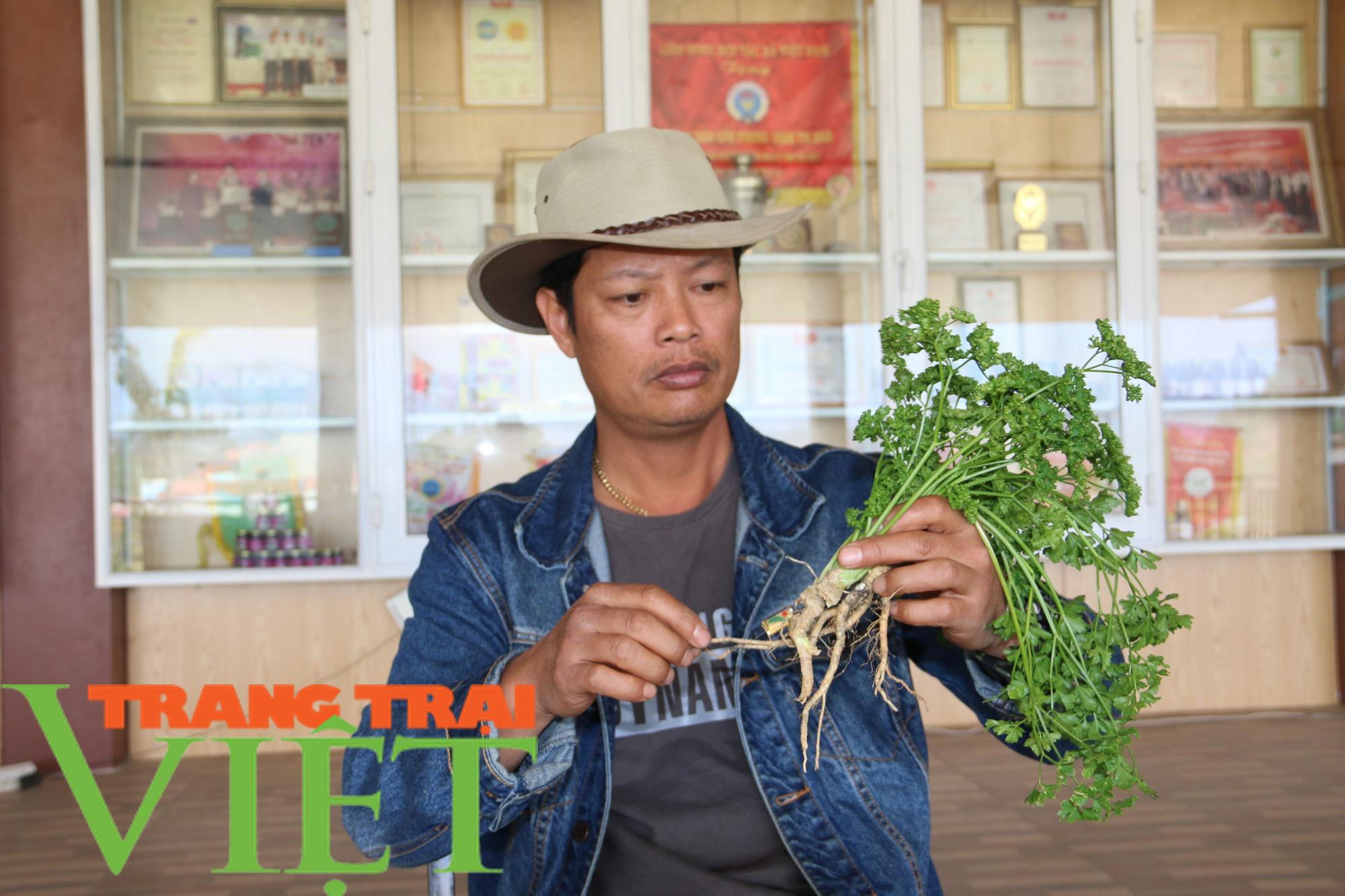 Mận sấy dẻo thảo dược, món quà vùng thảo nguyên xanh - Ảnh 4.