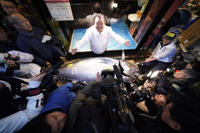 Hơn 41 tỷ đồng cho một con cá ngừ vây xanh ở Nhật Bản - Ảnh 1.