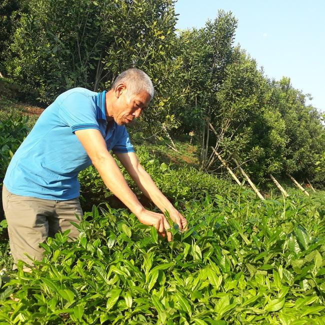 Bước tiến trong sản xuất nông nghiệp ở thành phố Lai Châu - Ảnh 3.