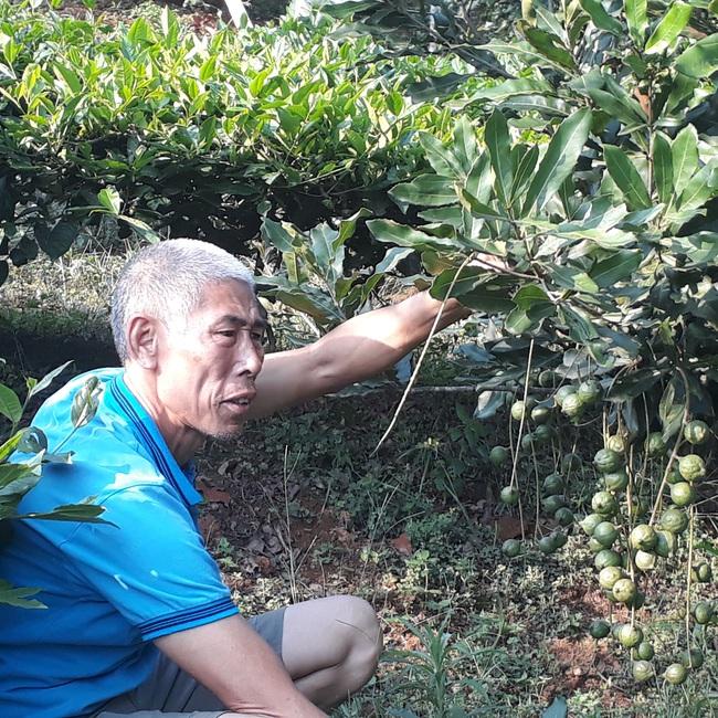 Bước tiến trong sản xuất nông nghiệp ở thành phố Lai Châu - Ảnh 2.