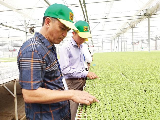 """Cùng nông dân khám phá """"đại bản doanh"""" trồng rau công nghệ cao - Ảnh 6."""