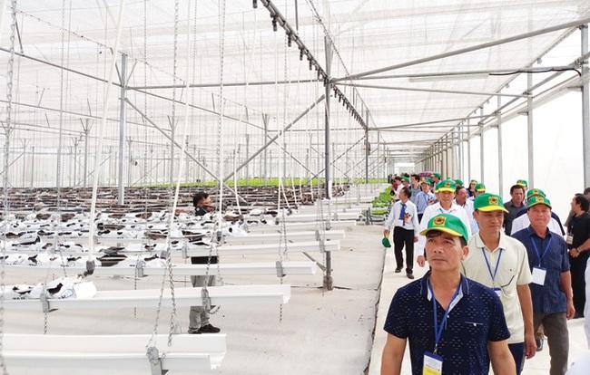 """Cùng nông dân khám phá """"đại bản doanh"""" trồng rau công nghệ cao - Ảnh 1."""