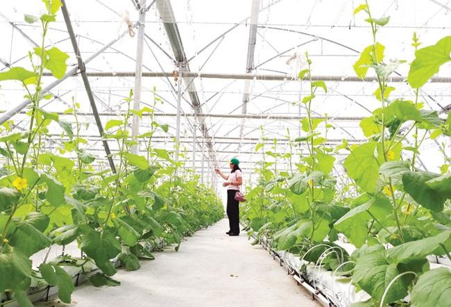 """Cùng nông dân khám phá """"đại bản doanh"""" trồng rau công nghệ cao - Ảnh 2."""