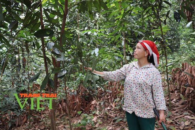 Lào Cai: Liêm Phú chuyển mình nhờ Nông thôn mới - Ảnh 4.