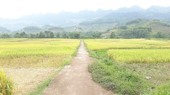 Yên Châu chú trọng phát triển giao thông nông thôn - Ảnh 3.