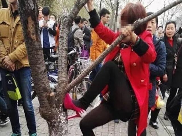 Thiếu nữ TQ mặc váy ngắn leo cây chụp ảnh gây phẫn nộ