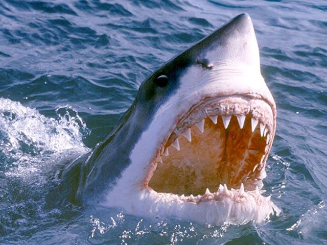 """Thoát hàm cá mập khổng lồ nhờ đòn """"nhất dương chỉ"""""""