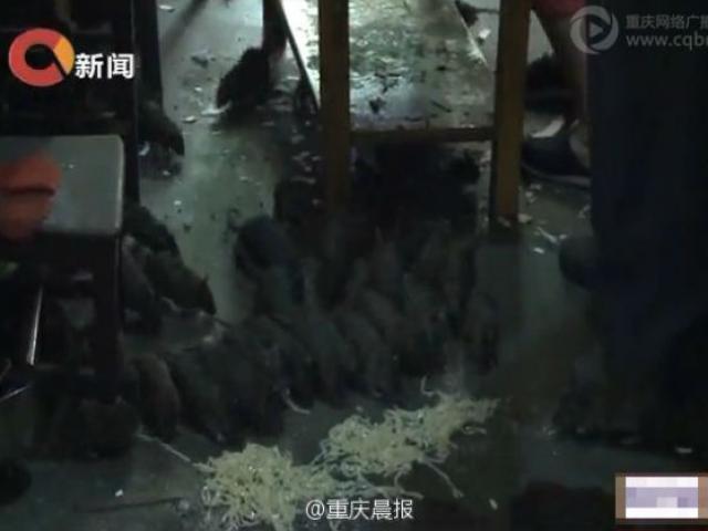 Người đàn ông sống cùng 40 con chuột ở TQ