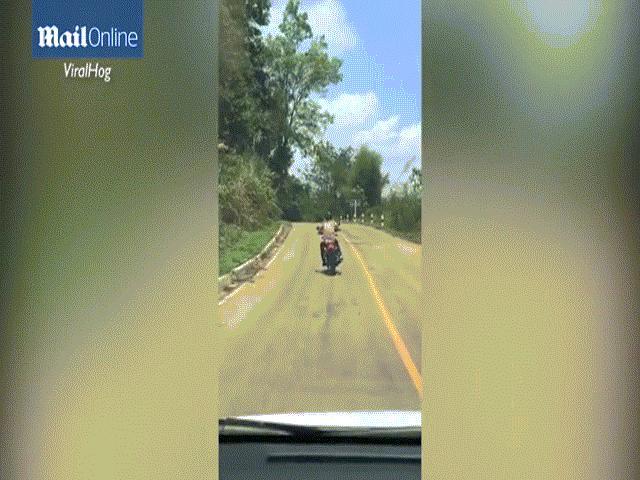 Đang bò trên đường, rắn bay lên không trung đớp người đi xe máy