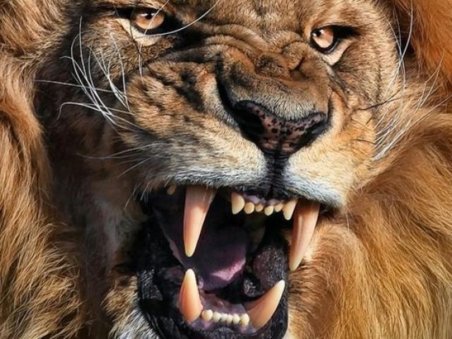 Đàn sư tử châu Phi tàn sát 1.500 người đẫm máu nhất lịch sử