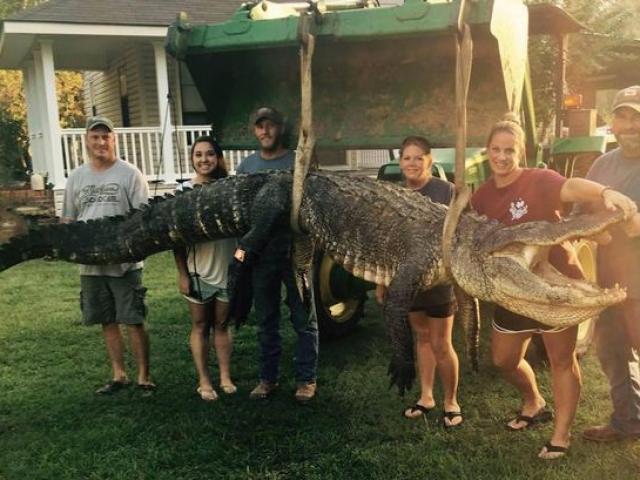 Nữ thợ săn bắt được cá sấu khổng lồ nặng 300kg