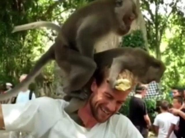 Cặp khỉ nổi hứng làm