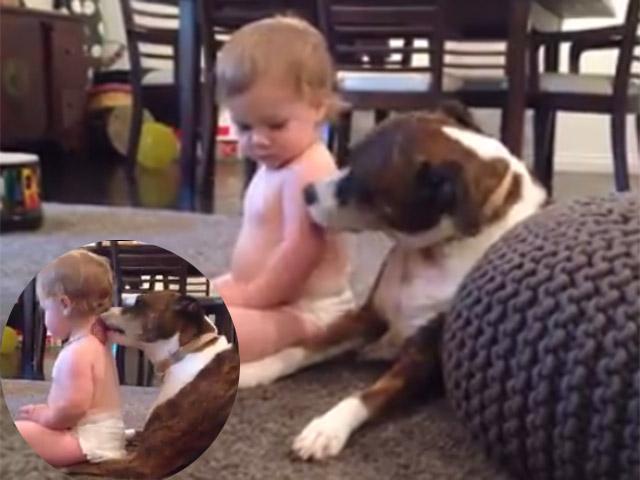 """Clip: Bé con thích mê khi được chó yêu """"mát xa"""""""