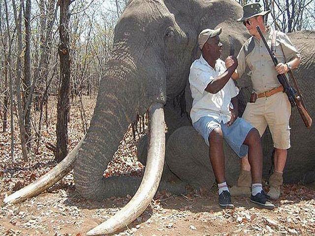 Chi 1,3 tỉ để bắn chết chú voi lớn nhất châu Phi