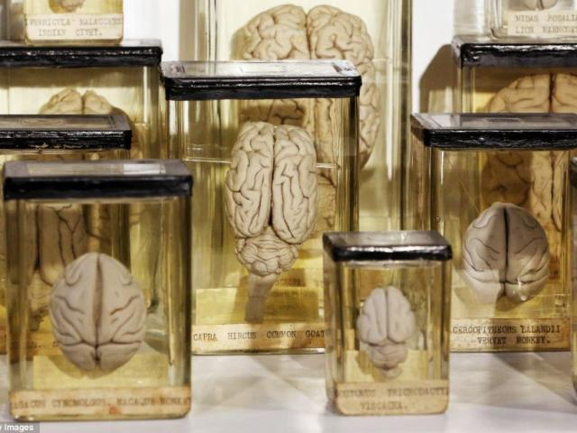 Mỹ: Đột nhập bảo tàng đánh cắp não người bán trên mạng