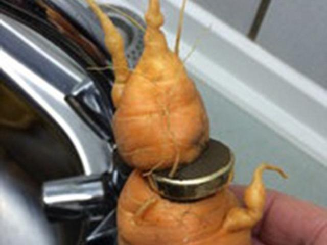 """Đức: Mất nhẫn vàng, 3 năm sau được củ cà rốt """"mang trả"""""""