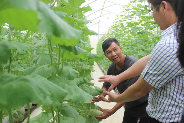 Ông Đỗ Nhật Tâm (xã Xuân Định, huyện Xuân Lộc) giới thiệu với khách tham quan vườn dưa lưới trồng trong nhà màng của gia đình cho thu nhập cao.