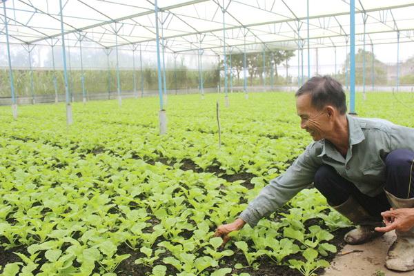 Ông Đỗ Nhật Tâm giới thiệu với khách thăm quan vườn dưa lưới trồng trong nhà màng của gia đình cho thu nhập cao. (Ảnh: B.Nguyên)
