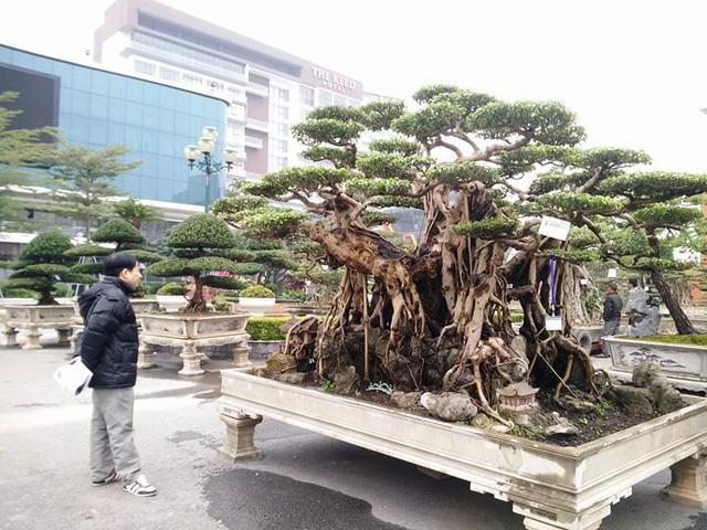 Triển lãm cây cảnh nghệ thuật tại Ninh Bình thu hút gần 2.000 tác phẩm cây nổi tiếng khắp các tỉnh miền Bắc quy tụ về, khỏe sắc.