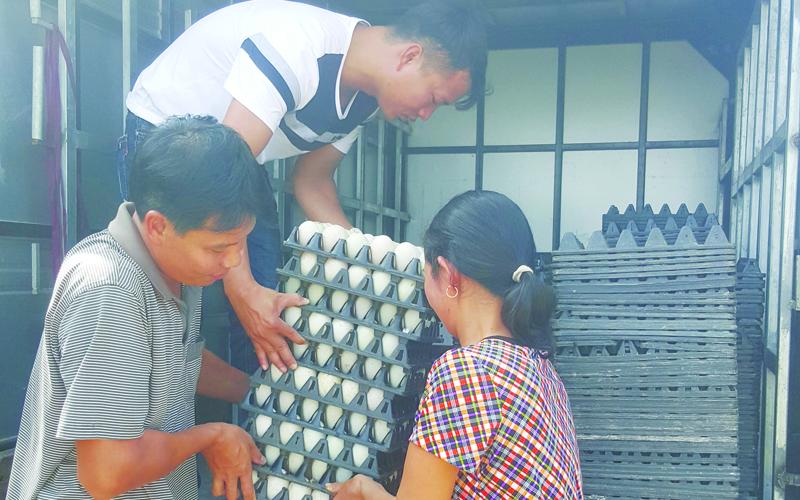 Thương lái đến tận nơi thu mua trứng vịt với giá 2.100 đ/quả.