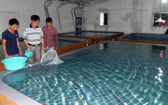 Kiểm tra tôm giống TTCT tại Cty Hải Tuấn, phường Quỳnh Dị, TX Hoàng Mai.