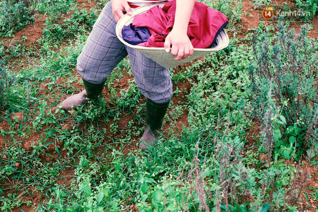 Giữa thời buổi nhà nhà người người sử dụng phân thuốc hoá học trong nông nghiệp, thì con đường mà Miên đang đi thật sự vô cùng chông gai.