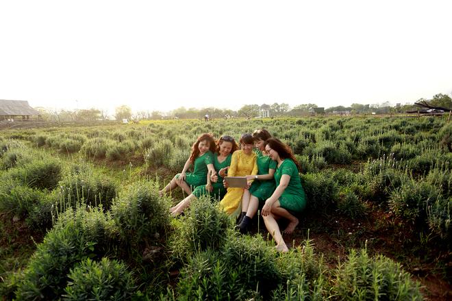 Rất nhiều du khách biết đến vườn hoa oải hương ở ngoại thành Hà Nội, đã không ngại ngần tìm đến. Theo chủ vườn, mỗi ngày nơi này đón khoảng 100 lượt khách, cuối tuần có thể lên đến 400-500 lượt. Vé vào cổng là 70.000 đồng/ người.