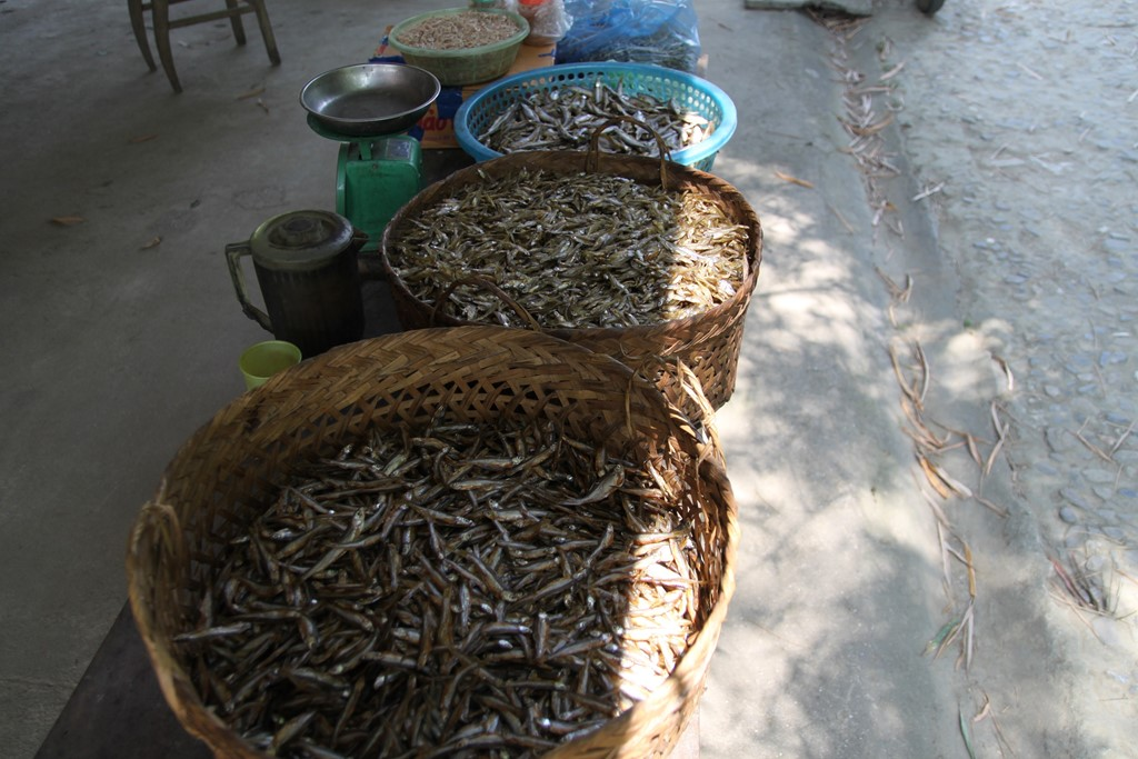 Bạn có thể mua một chút cá khô được nướng qua than hoa về làm quà. Món này ăn rất ngon, sẽ làm bạn mãi như một món quà mà lòng hồ ban tặng.