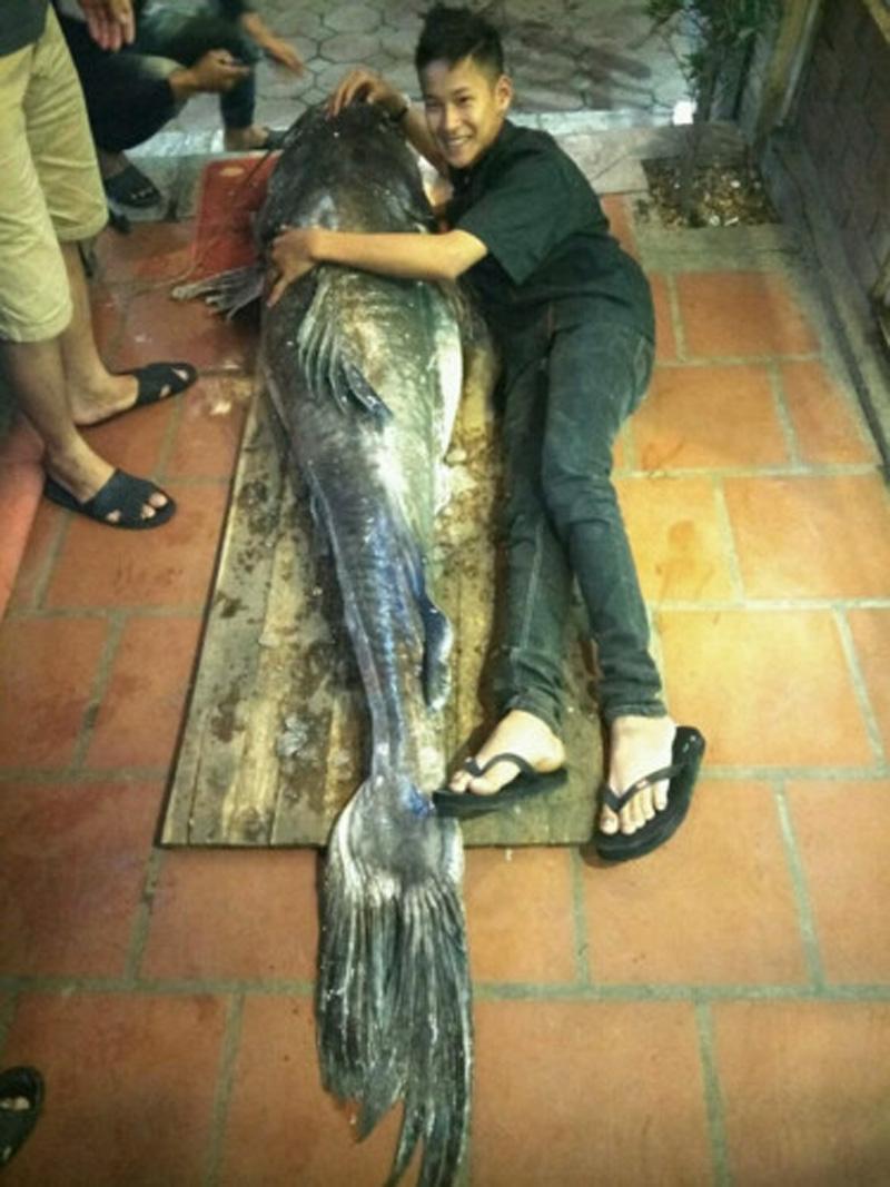 Tối 23/4, con cá lăng 112kg bắt được trên dòng Cửu Long đã được vận chuyển bằng đường hàng không từ TP. HCM đưa về Hà Nội để phục vụ thực khách.