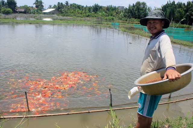 Lão nông Nguyễn Tấn Phong bên ao nuôi cá cảnh. Ảnh: T.Tuấn