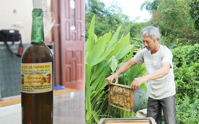 Với trên 200 thùng ong, đến nay HTX Thành Đạt, xã Nông Hạ (Chợ Mới) đang giúp cho nhiều hộ dân phát triển kinh tế, nâng cao thu nhập đảm bảo tiêu chí nông thôn mới