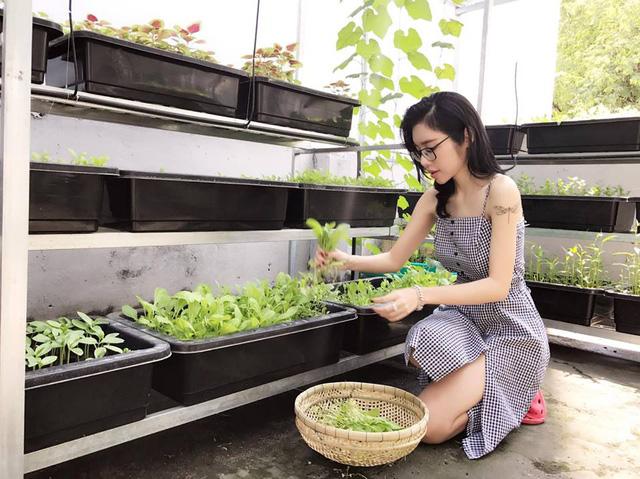 Khay trồng rau được lắp đặt ngay ngắn trên giá đỡ và có mái che để đảm bảo cây phát triển tốt, không bị ảnh hưởng nhiều bởi thời tiết.