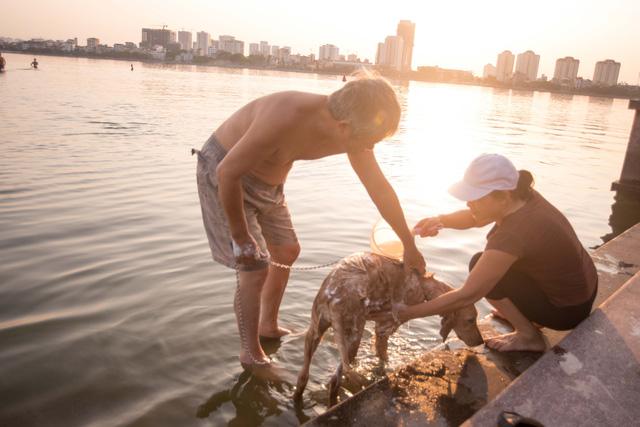 Những chú chó cưng cùng được ra hồ bơi