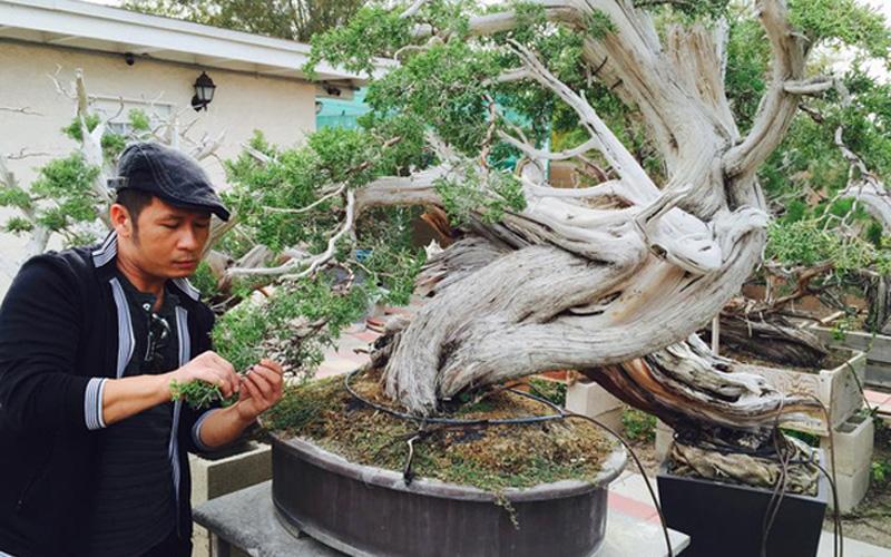 Chàng ca sĩ chăm chút từng li, từng tí cho chậu bonsai của mình.