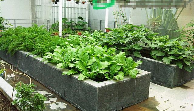 Những vườn rau được xây công phu và tốn kém.