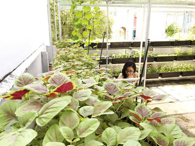 Bà mẹ hai con trồng khá nhiều loại rau như rau cải, rau dền, rau muống, rau mùng tơi...