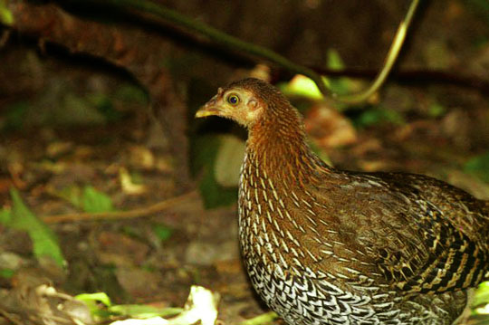 ... hoặc trong các tổ bị bỏ rơi của các loài chim khác và sóc.