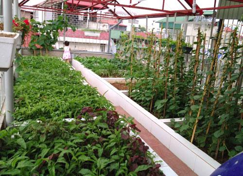 Bên cạnh cách trồng rau trong thùng xốp vẫn thường thấy, nhiều gia đình ở Hà Nội còn mạnh tay chi cả 100 triệu đồng để xây bồn, bể để mong có một vườn rau sạch trên sân thượng, vừa để bền chắc, vừa đảm bảo tính thẩm mỹ cho căn nhà.