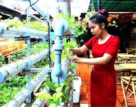 Chị Vương Thị Hoan bên giàn rau trồng theo mô hình thủy canh.