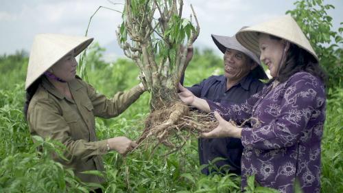 Bà Bảy Nga (bên trái) mời các nhà khoa học nghiên cứu về cây hoàn ngọc. Ảnh: DN Hoàn Ngọc.