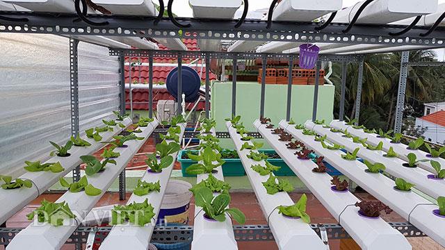 Với diện tích sân thượng khoảng 35m2, anh thiết kế 2 giàn rau thủy canh: một giàn trồng các loại rau của họ cải như cải … và rau muống; giàn còn lại anh dành riêng để trồng xà lách.