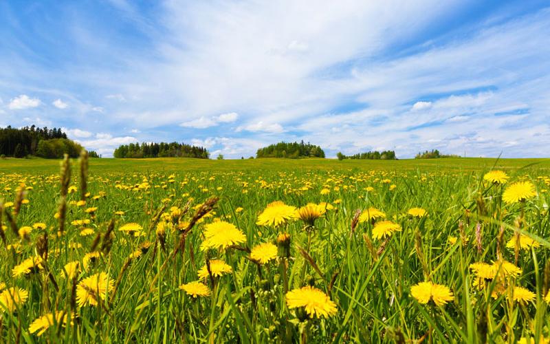 Ngoài ra, vì loài hoa này có đặc điểm là nở và tàn vào những khung giờ nhất định nên từ xưa, những người chăn cừu xem nó như một chiếc đồng hồ.