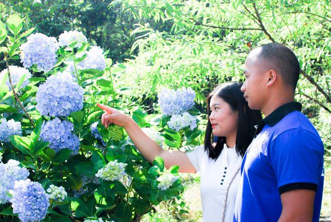 Để vào tham quan và chụp ảnh ở vườn hoa cẩm tú cầu bạn chỉ mất 10.000 nghìn đồng. Ảnh: Phượt bụi Cao Bằng.