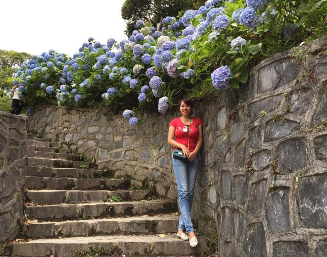 Vườn hoa cẩm tú cầu trở thành điểm check-in rầm rộ trong thời gian gần đây của giới trẻ Cao Bằng.