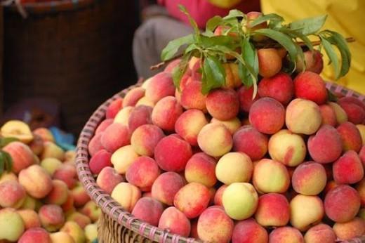 Đào Mộc Châu thơm ngon, giòn ngọt là sản vật cao nguyên | ETime